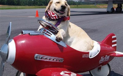 dog-flying-red-plane.jpg